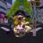 Creatorium Deflectrkon Gamileem's avatar