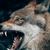WolfAlpha69