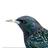 Elliot the Bird's avatar