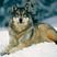 WolfManNinjoyXD3138YT's avatar
