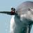 Dolphin171's avatar