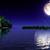 Moonlight12997