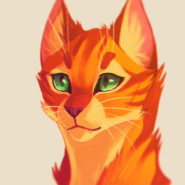 Kingcat 100