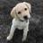 David HedgeMage's avatar