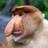 Pedyjczyk's avatar