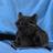 Anarrumando's avatar
