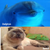 DolphiN and BarsiK