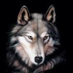 Wolf964's avatar
