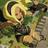 Eluu472's avatar