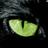 Singri's avatar
