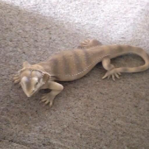 The Lizard Man.105's avatar