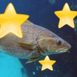 FantasticalCodfish