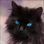 Broomstripe's avatar