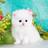 MeowBDS's avatar