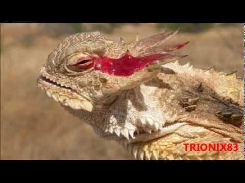 Siguiendo con el origen de los diseños de los dragones.