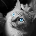 AnitaLove1's avatar