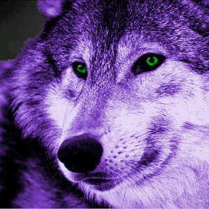 PurpleWolffy's avatar