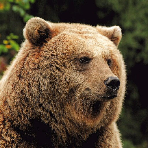 Domy L'Ours Brun's avatar
