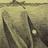 OceanDevil's avatar