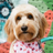 Windycitydad's avatar