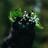 Lune Ambrée05's avatar