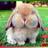 Chunkbunny07's avatar