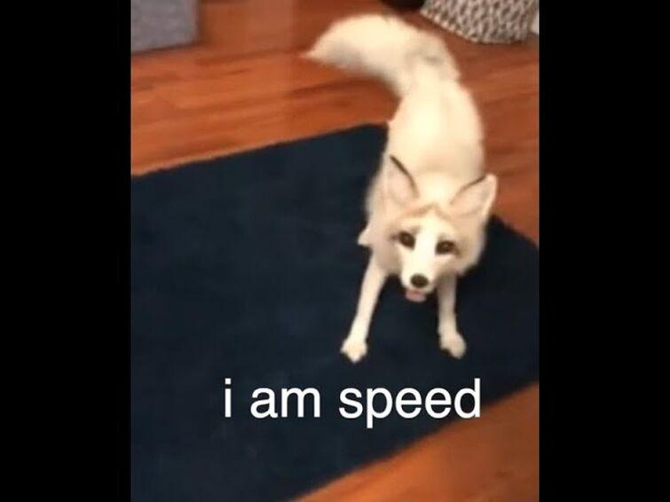 The ADHD Fox
