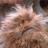 Fizzgigsneedlove's avatar