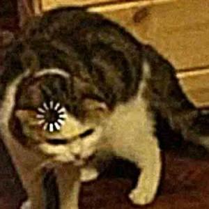 Oof oof oofles's avatar