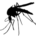 Mosquito-High-Quality-PNG