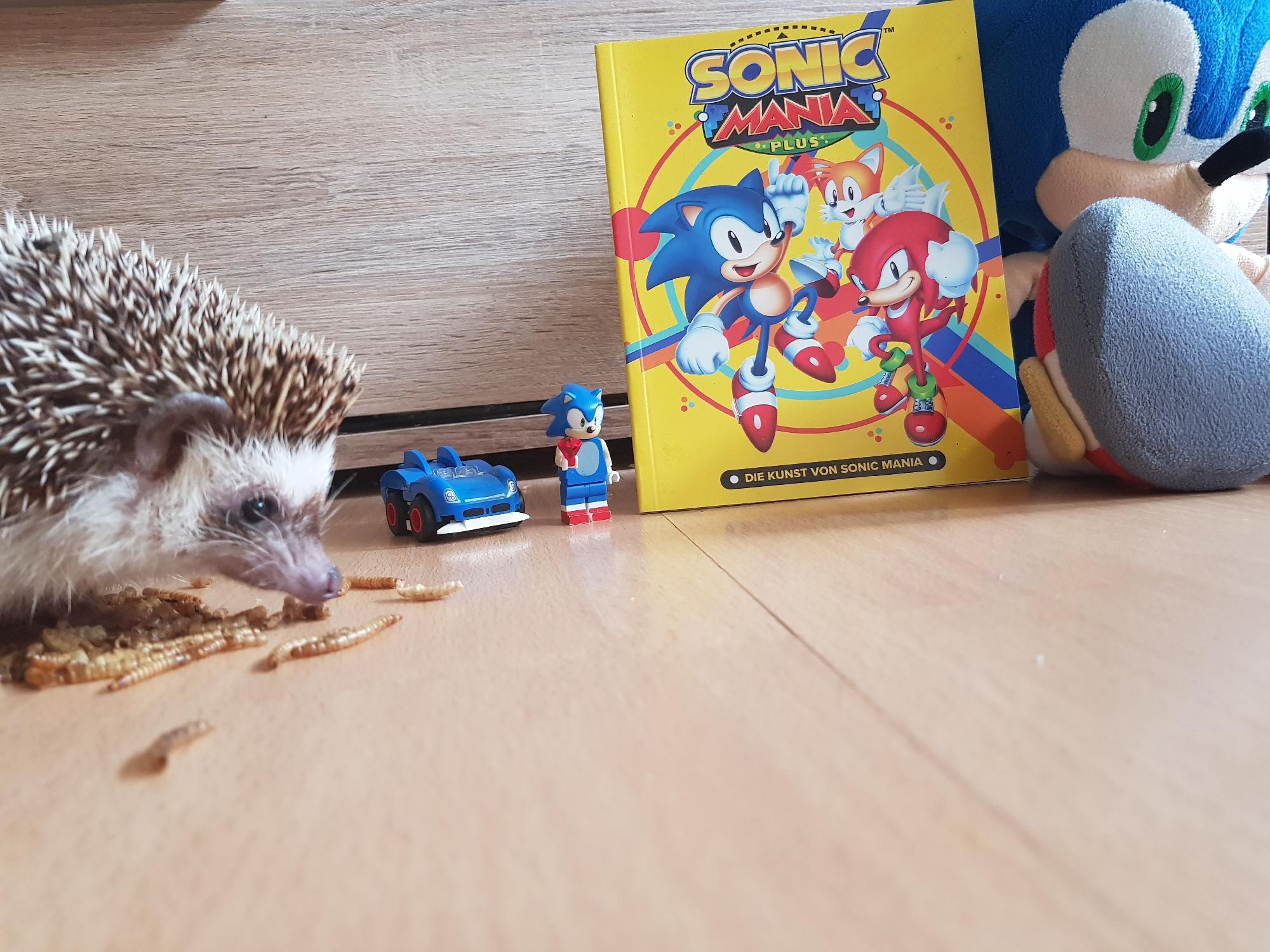 Real Sonic trifft Lego Sonic. 8 bit Sonic und blüsch Sonic
