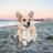 ElvenCorgi123's avatar