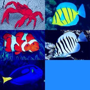 5fish and 1crab2.jpg