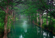 Riverinevergreenforest