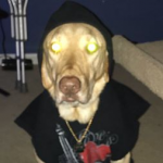 THUNDER THE LAB's avatar