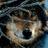 Shiroi1tsuki's avatar