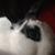 Rabbity Nabbity