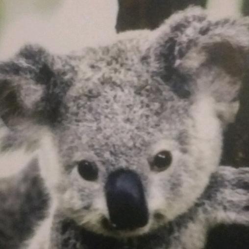 Koalagirlx3