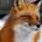 Lambdafox's avatar