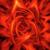 Imperial Treasure Lotus