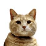 Nihilicent's avatar