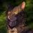 Соня Коклева's avatar