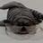 Hungry Stripy's avatar