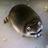 Frogchair2's avatar