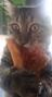 Retrofit26's avatar
