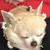 Queen galxy llamas ajpw