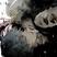 ReiSr's avatar