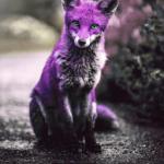 FoxofJudyFoster