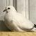 LLdance's avatar