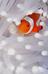 1357p's avatar